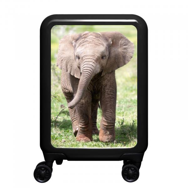 Front Tiere Elefantenbaby